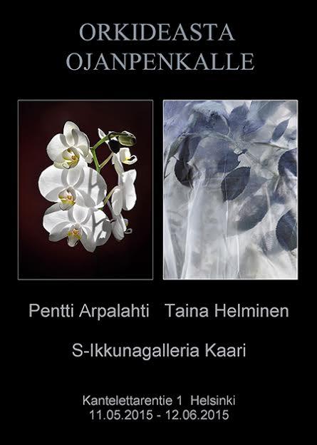Orkideasta ojanpenkalle